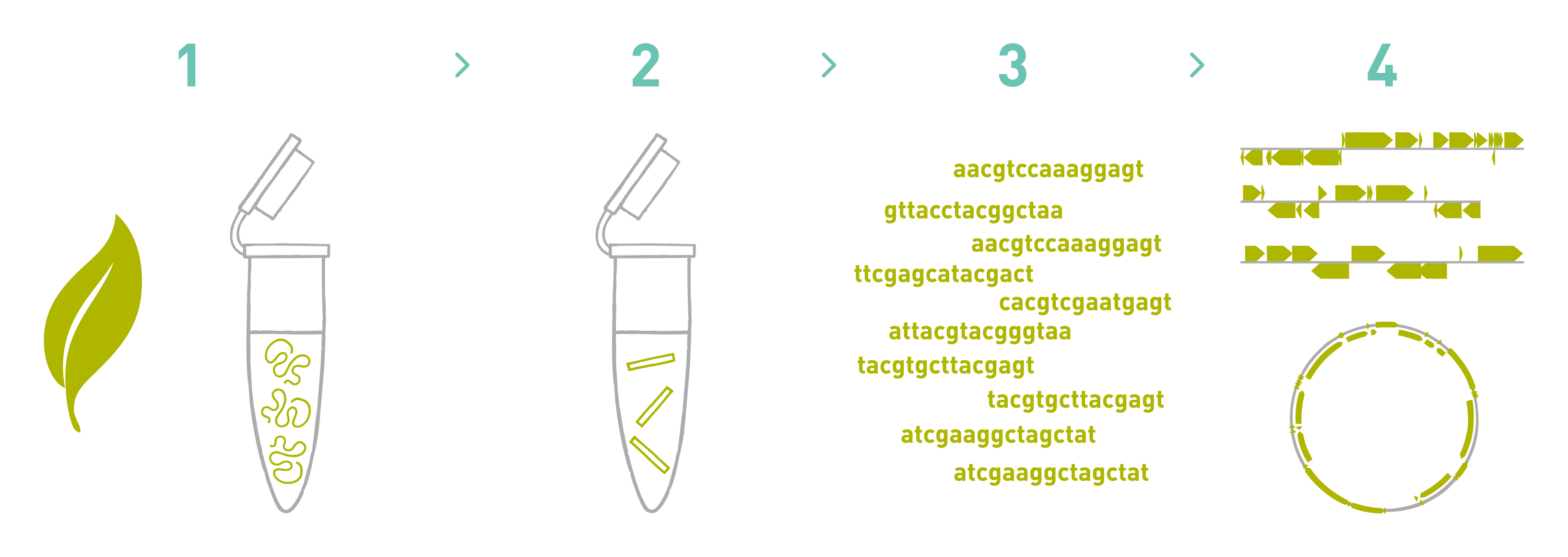 Eukaryotic genome sequencing service - AllGenetics